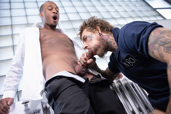 Big-cocked inked power top Bo Sinn barebacks black muscle stud Trent King until they blow their loads in an interracial scene in High Maintenance at Bromo